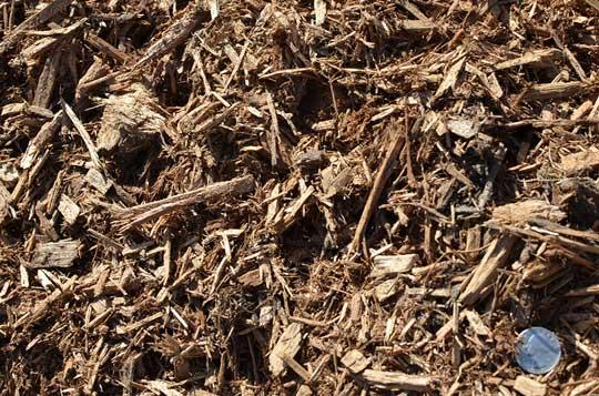 Cypress-(Mulch)-(3)