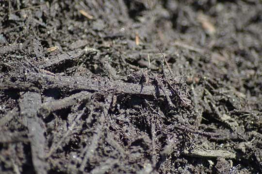 Obsidian-Black-(Mulch)-(3)