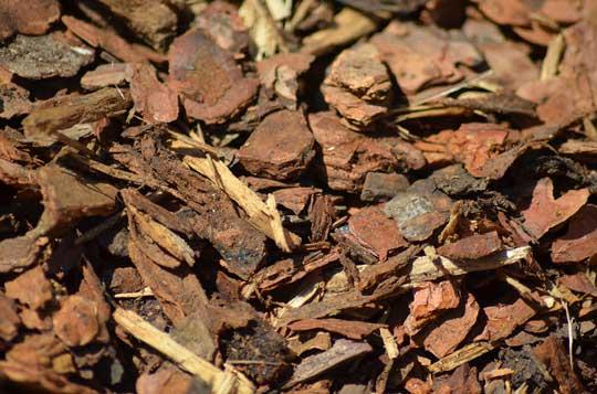 Pine-Bark-(Mulch)-(4)